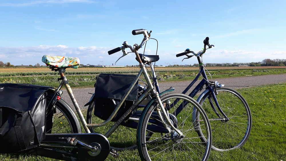 Bikes in tulip fields